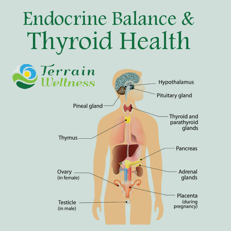 Thyroid Doctors Portland Naturopathic Specialists Naturopath
