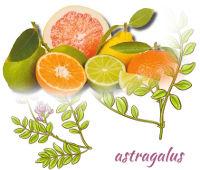 Astragulus & Food-Based Vitamin-C, Cold & Flu