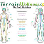 body meridians in chinese medicine and acupuncture diagram female.