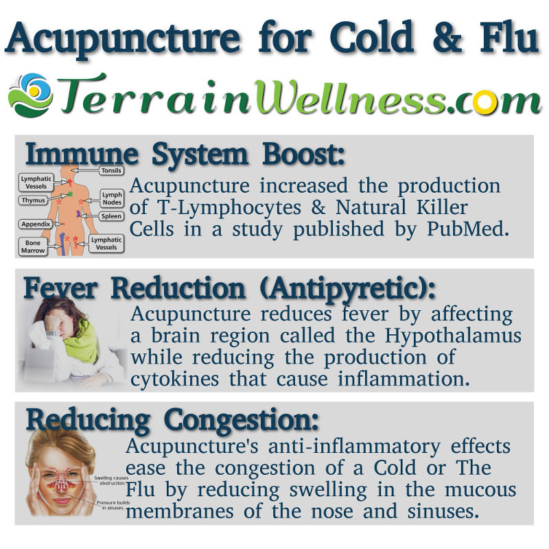 Infographic of Acupuncture for Cold & Flu.