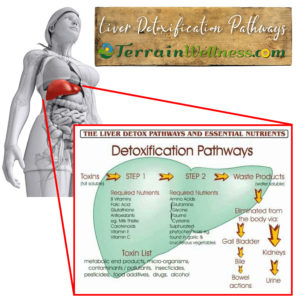 liver detoxification pathways