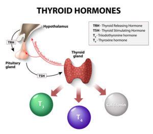 heavy metals hypothyroidism