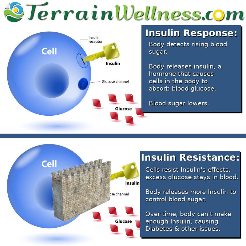 insulin resistance, thyroid and blood sugar