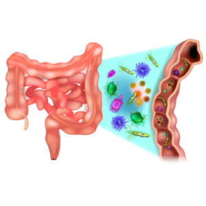 healthy gut flora, microbiome and hormone health